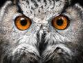 Owls Portrait. eyes Royalty Free Stock Photo