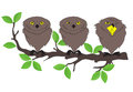 Owls sitting on a tree branch Stock Photography