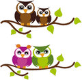 Owls on tree Stock Photo