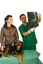 Owner with dog and  radiologist vet Royalty Free Stock Images