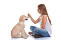 Owner training puppy dog with treat Royalty Free Stock Photos