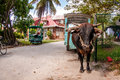 Ox cart la digue seychelles an parked on island Stock Images