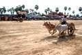 Ox cart racing in Thailand. Royalty Free Stock Photo