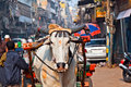 Ox cart transportation on early morning in old delhi india Stock Image