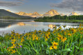 Oxbow Bend Sunrise Royalty Free Stock Photo