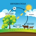 Oxygen cycle vector illustration. Labeled educational O2 circulation scheme Royalty Free Stock Photo