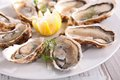 Oyster close up on fresh Stock Photography