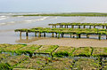Oyster-culture in Les Dunes de Varreville Royalty Free Stock Photo