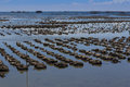 Oyster farm in the sea Stock Photography