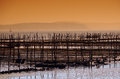 Oyster-farming in Arcachon bay Stock Photo