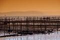 Oyster-farming in Arcachon bay Stock Photo