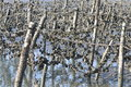 Oyster field in taiwan fishermen structure into with tree trunks rope iron wire and shells Royalty Free Stock Photo