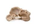 Oyster mushroom on white background Stock Photos