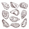 Oyster sea shellfish sketch, pencil drawing set