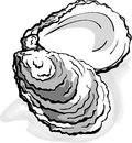 Oyster seafood shell single isolated element - illustration