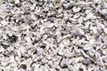 Oyster shell background pattern of loads of empty shells in sun light Stock Image