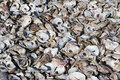 Oyster shell pile discarded shells are piled in a heap Royalty Free Stock Photos