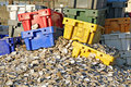 Oyster shells and crates Stock Photos
