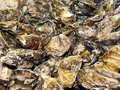 Oysters background raw sea food Royalty Free Stock Photos