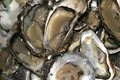 Oysters, close up Royalty Free Stock Image