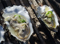 Oysters on the grill delicatessen is being grilled barbeque in park Royalty Free Stock Image