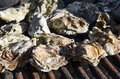 Oysters on the grill delicatessen is being grilled barbeque in park Royalty Free Stock Photos