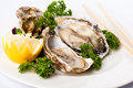 Oysters with lemon Royalty Free Stock Photos