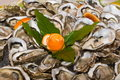 Oysters oyster dish decorated with orange peel Stock Images