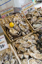 Oysters for sale in a parisian market Royalty Free Stock Photos