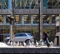 Pájaros de la nieve Foto de archivo libre de regalías