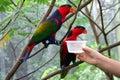 Pássaros de alimentação Imagens de Stock Royalty Free