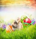 Påskkanin på gräs med ägg och våren blommar det easter kortet Arkivfoton