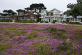 Pacific Grove Houses, Monterey...
