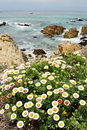 Pacific Ocean Flowers Stock Images