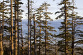 Pacific Rim National Park, Vancouver Island, British Columbia Royalty Free Stock Photo