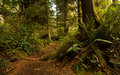 Pacific rim rainforest trail walk canada Royalty Free Stock Photo