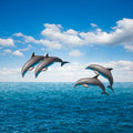 Pack of jumping dolphins beautiful seascape with deep ocean waters and cloudscape Stock Photography