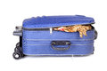 Packing bag travel on isolated background Royalty Free Stock Image