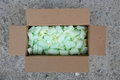 Packing peanuts close up Royalty Free Stock Photo