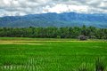Paddy field by the hill with a hut in northern thailand Royalty Free Stock Photography