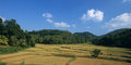 Paddy fields in center of  Sri Lanka Royalty Free Stock Images
