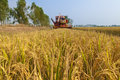 Paddy fields and Harvesting machine in countryside. Royalty Free Stock Photo