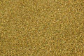 Paddy gold surface in drying Stock Image