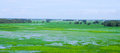 Paddy rice field in southern Vietnam Royalty Free Stock Photo