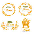 Paddy Wheat rice organic grain products food banner sign vector design Royalty Free Stock Photo