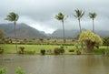 Paesaggio tropicale da maui hawai Fotografie Stock
