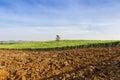 Paesaggio tropicale dell azienda agricola di agricoltura del giacimento della canna da zucchero Fotografia Stock Libera da Diritti