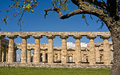 Paestum Greek Temple, Italy Royalty Free Stock Photo