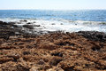 Pafos cyprus rocky coastline next to Royalty Free Stock Image