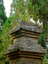 The pagoda forest in shaolin temple china s largest existing architecture with pigeons standing on it inside songshan dengfeng Stock Photography